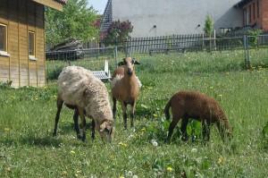 Ferienhof-Gerstel-Craula-Tiere-Bauernhof